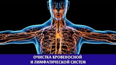 Очистка кровеносной и лимфатической систем