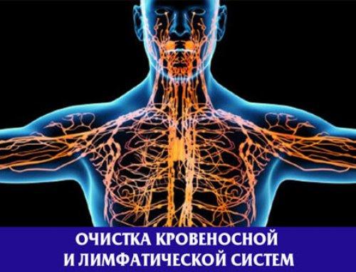 Очищение кровеносной и лимфатической системы